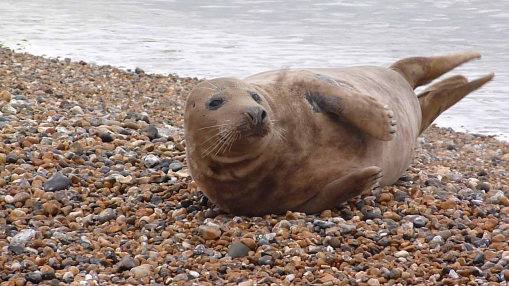 On arrival rescuers were surprised to find a healthy Grey Seal