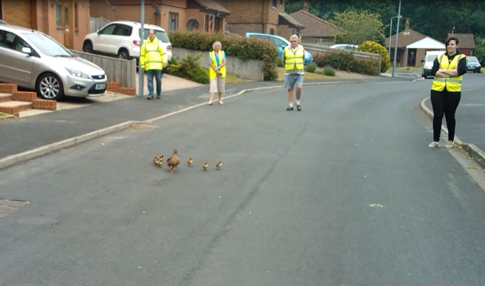 Rescuers were assigned to monitor and stand on any drains to prevent ducklings from falling through