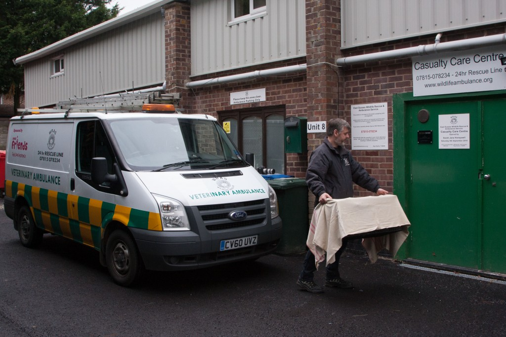 Trevor delivering a Casualty to WRAS's Casualty Centre.