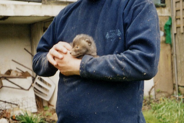 Fox cub resced from under floor boards at Hastings 2002