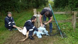 High Hurstwood Deer Rescue 20th Aug 2016 (4)
