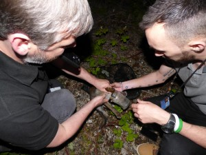 Trevor and Chris capture the fox cub.
