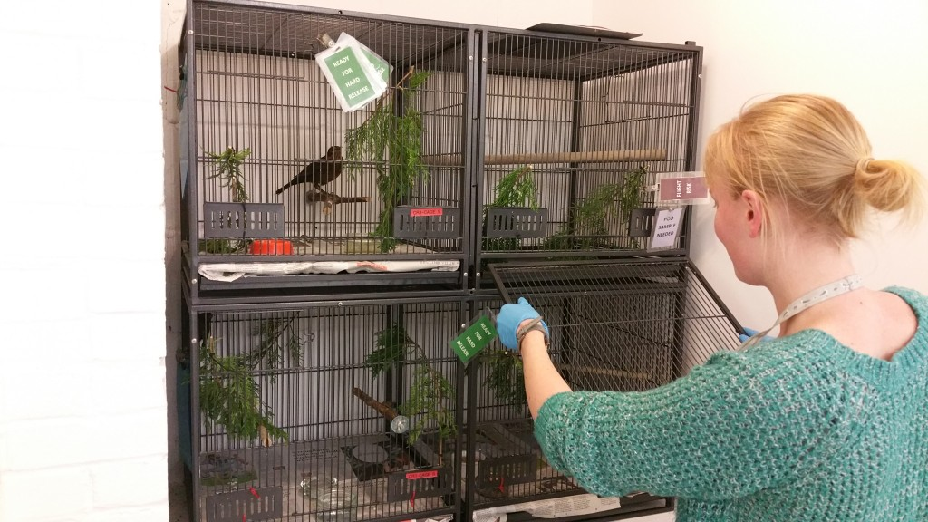 Volunteer Laura Cleaning out a cage.