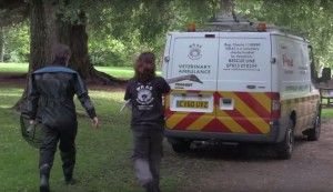 Rescuer carry a swan to WRAS's Ambulance