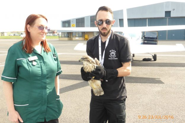 WRAS Chris Riddington handing over the Buzzard to Lucy Kells from Vale Wildlife Rescue at Gloucester Airport (1)