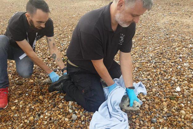 Dog Rescue Eastbourne