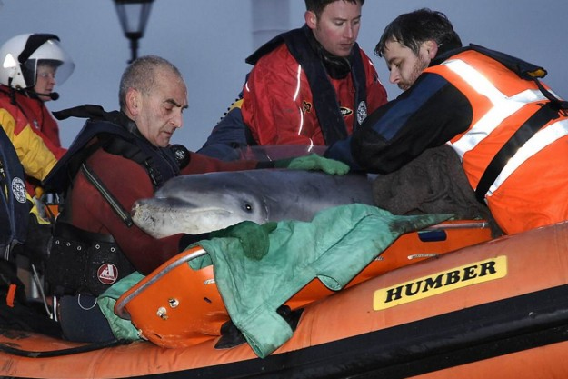 Trevor (right) rescuing a Dolphin in Cumbria in 2006