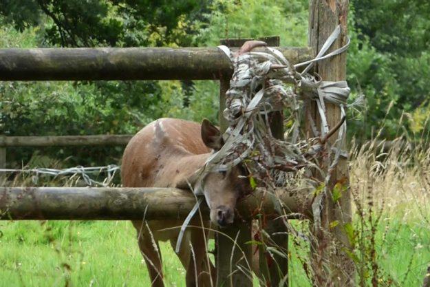 High Hurstwood Deer Rescue